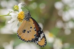 Orange tropical butterfly on a flower stock photo