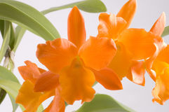 Orange tropical flower stock photography