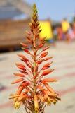 orange tropisk blomma Arkivfoton