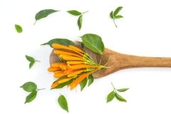 Orange trumpet flowers on wood ladle Stock Photo