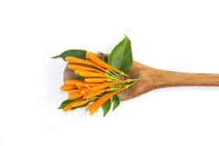 Orange trumpet flowers on wood ladle Stock Images