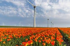 Orange tulip field and wind turbines in the Noordoostpolder municipality, Flevoland. Netherlands royalty free stock image