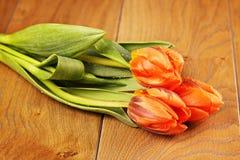 Orange Tulip Flowers Royalty Free Stock Photos