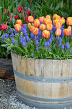 Orange tulip planter Stock Photo
