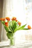 Orange Tulips Stock Photos