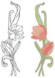 Orange Tulips. Hand-drawn in loose style with soft colors. Outlines and color on separate layers, global colors used for easy change Royalty Free Stock Photos