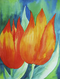 Orange Tulips. Photo of a watercolour painting, created by the photographer herself Royalty Free Stock Image