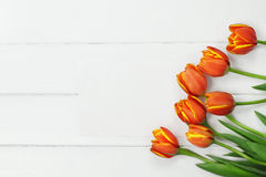 Orange Tulips and Blank Card Stock Photography