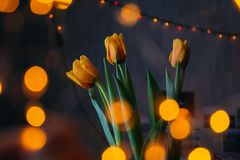 Orange Tulips With Bokeh Lights stock photo