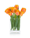 Orange tulips in flower bowl Royalty Free Stock Photography