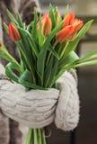 Orange tulips in hands stock image
