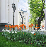 Orange tulips and lanterns. Tulips on a background of a building with columns and lanterns Royalty Free Stock Images