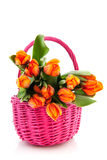 Orange tulips in pink basket Royalty Free Stock Photos