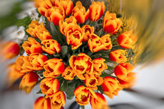 Orange Tulpen bokeh lizenzfreie stockfotografie
