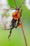 Orange Twists royaltyfri foto