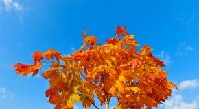 Orange und Blau Stockfoto