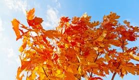 Orange und Blau Lizenzfreies Stockfoto
