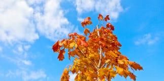 Orange und Blau Lizenzfreie Stockfotografie