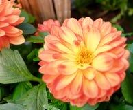 Orange und gelb in Blume Lizenzfreie Stockbilder