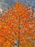 Orange und Gelb-Mischung des Falles Stockfotografie