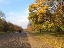 Orange und gelbe Bäume Lizenzfreies Stockbild