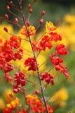 Orange und gelbe Blume Lizenzfreie Stockfotografie