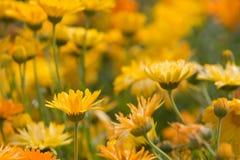 Orange und gelbe Blumen lizenzfreies stockbild