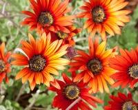 Orange und gelbe Blumen Lizenzfreie Stockfotos
