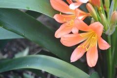Orange und gelbe Blumen Stockbild