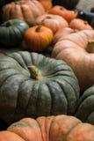 Orange und grüne Cinderella Pumpkins Stockbild