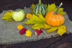 Orange und grüner Kürbis Stockfoto