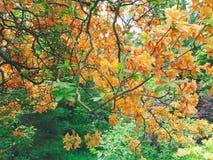 Orange und rote Blumen und Bäume in einem Garten Lizenzfreie Stockbilder