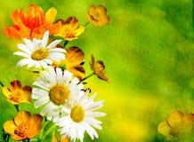 Orange und weiße Blumen auf dem grünen Hintergrund Stockbild