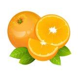 Orange uppsättning för vektor för skivafruktsymbol Realistisk saftig apelsin med sidor Royaltyfria Bilder