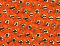 orange vallmor arkivbilder