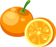 Orange vector. Orange isolated illustration on white background vector Stock Photo