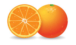 Orange Vector Stock Images