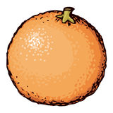 Orange. Vector drawing Royalty Free Stock Image