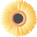 Orange vector flower. On white background Royalty Free Stock Images