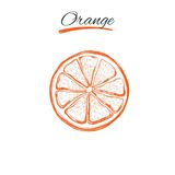 Orange. Vector hand drawn. Natural herbs and flowers. Beauty and Ayurveda. Organic cosmetics. Orange. Vector hand drawn. Isolated objects. Natural herbs and Royalty Free Stock Photos