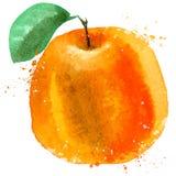 Orange vector logo design template. food or fruit Stock Photo