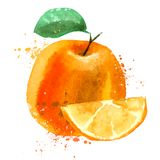 Orange vector logo design template. fruit or food Royalty Free Stock Image
