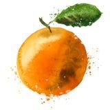 Orange vector logo design template. fruit or food Royalty Free Stock Photography