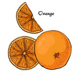Orange vector sketch 2 Stock Photo