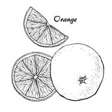 Orange vector sketch Royalty Free Stock Image
