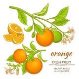 Orange vektoruppsättning Fotografering för Bildbyråer