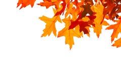 Orange verlässt Rahmenweißhintergrund Stockfotografie