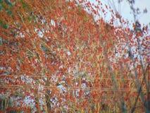 Orange Vibe stockfotografie