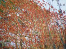 Orange vibe. Fall trees & x28; autumn & x29 Stock Photography