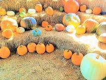Orange vita pumpor och kalebasser på baler av hö arkivfoton